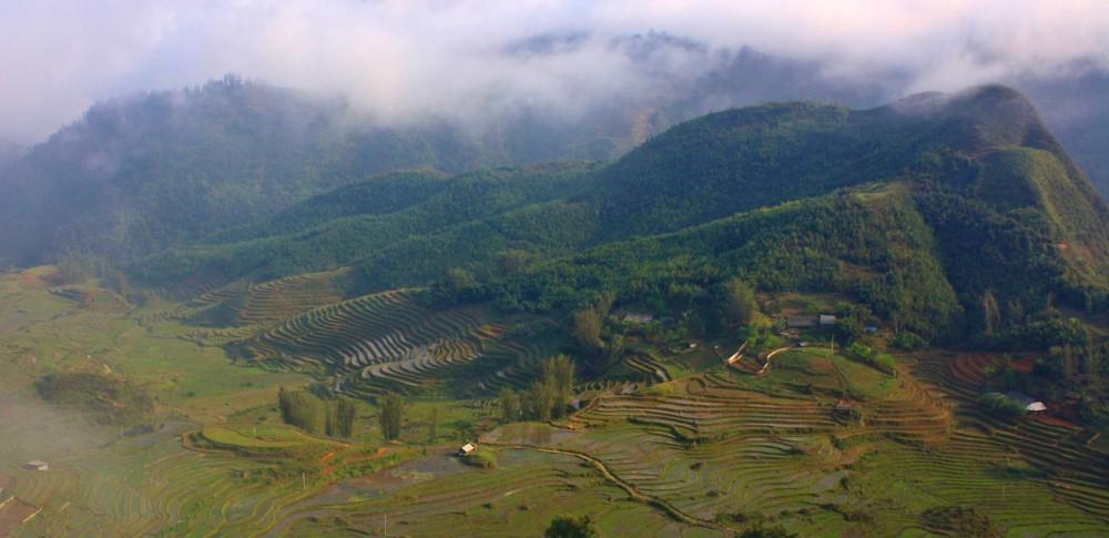 Reisterrassen - das Wetter in Sapa begünstigt den Reisanbau