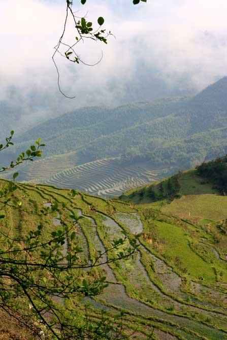 Sapa Reisfeld Vietnam